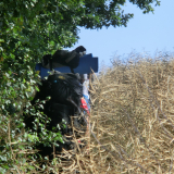 2015-08-05__16-37_Pfadfinderlager-Gardersee_CIMG67